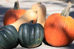 Pie pumpkins, butternut and acorn squash
