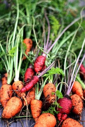 carrots2_112808