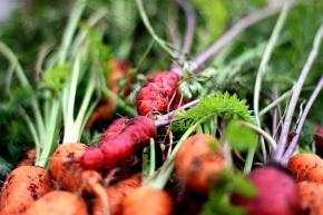carrots3_112808
