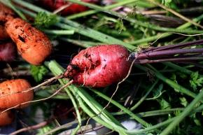 carrots4_112808