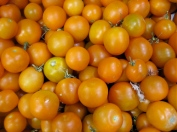 tomatoes_flamme_122808
