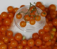 tomatoes_goldcurrant_122808