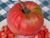 tomatoes_mortgagelifter_122808