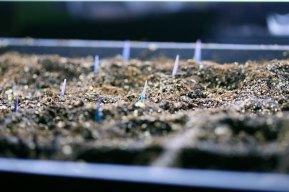 seedlings3_030409