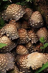 mushrooms0_061609