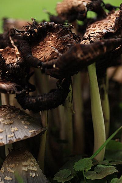 mushrooms5_061609