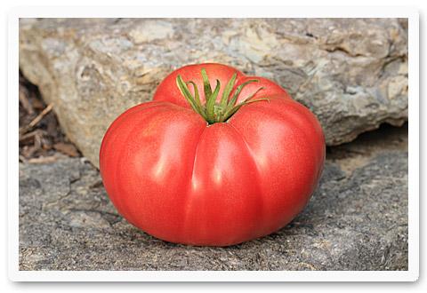heirloom tomatoes brandywine