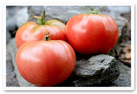 heirloom tomatoes dona
