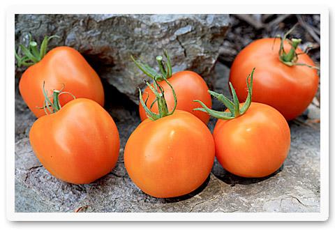 heirloom tomatoes flamme