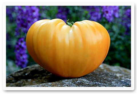 heirloom tomatoes orange strawberry